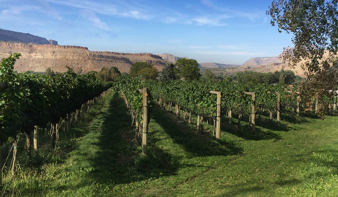 BookCliff Vineyards- Boulder Winery