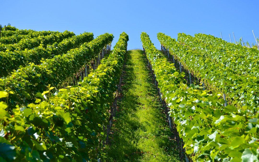 Top 10 Wineries in Colorado